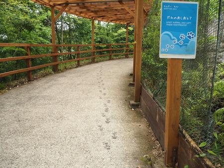 26-長崎バイオパークP6051021