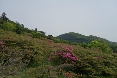 19-宝原つつじ公園DSC04622