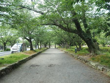 1-大村公園 花菖蒲P5310014