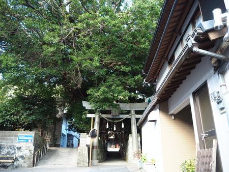 40−奈良尾神社 あこうの木PB210943