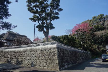 9-国見町神代小路 緋寒桜の郷まつりDSC00371