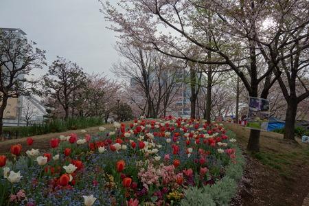 13-東品川海上公園DSC06502