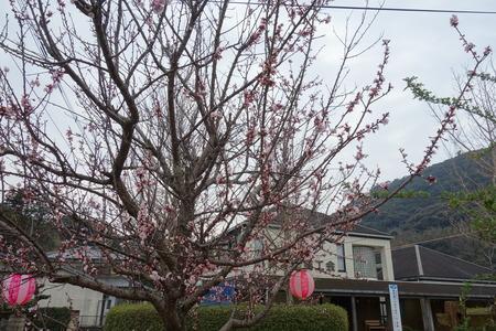 3−森山町桜まつりDSC01260