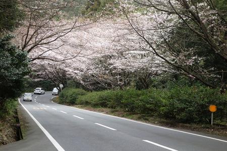 2-森山町 桜並木DSC00943