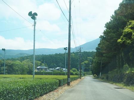 7-東彼杵町 そのぎ茶温泉 里山の湯宿 つわぶきの花P5310211