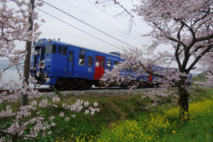 26-多良見古川の桜DSC04406