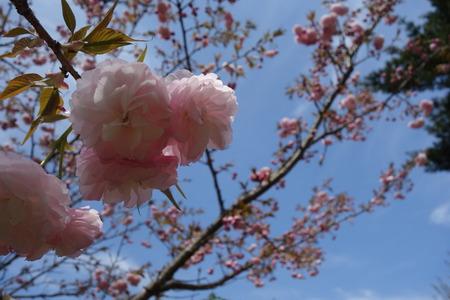 21-大村市千本桜公園DSC05943