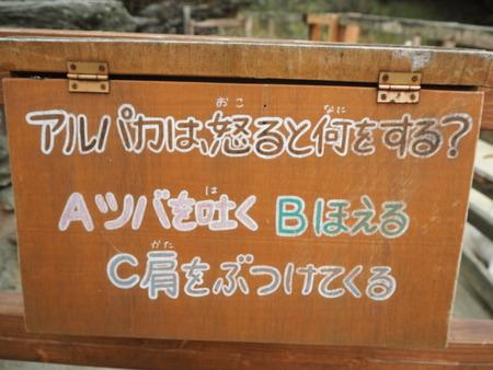 61-長崎バイオパーク アルパカP6051380