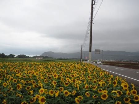 8-愛野町 国道205号線沿いP7213999