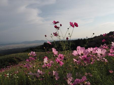 11-10-白木峰高原 コスモス畑PA110839