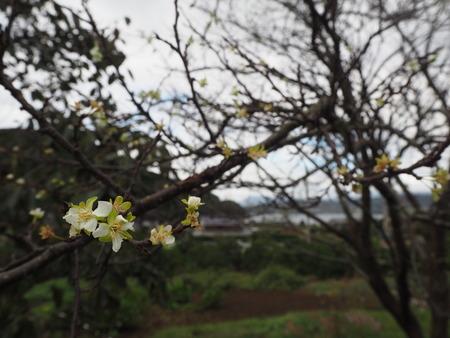 6−多良見町大草 コスモス畑PA191953