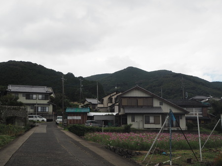 4−多良見町大草 コスモス畑PA191937