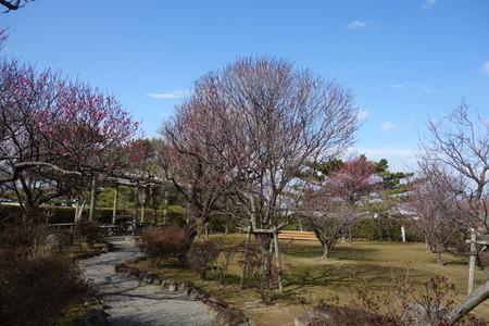 7-島原梅園DSC09533