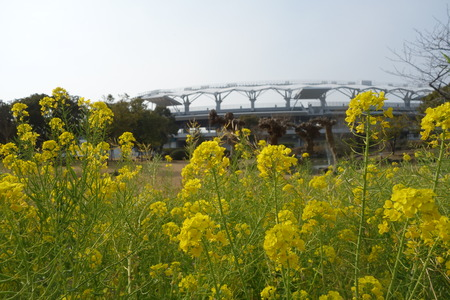 2-運動公園 菜の花DSC07307