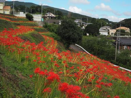 2021.09.18 長崎市琴海 社が丘花園P9181250