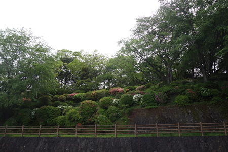 7−諫早上山つつじ園DSC09966