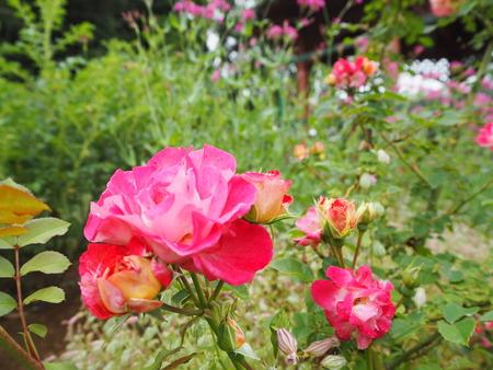 9-諫早市栗面町 Mai's garden P5171378