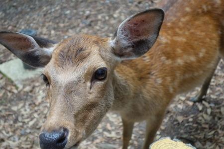 7-奈良公園DSC09095