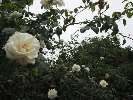 20-諫早市栗面町 Mai's garden P5171445