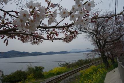 017−国道207号線古川の桜DSC03673