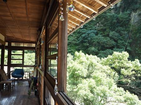 13-東彼杵町 滝の上の猫P8010215