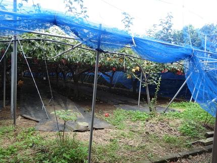 14-大庭なし園DSC03207