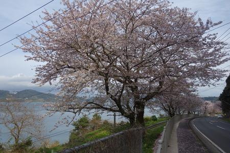 7-多良見町古川DSC05792