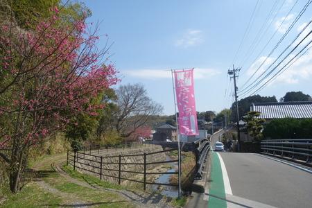 16-国見町神代小路 緋寒桜の郷まつりDSC00403