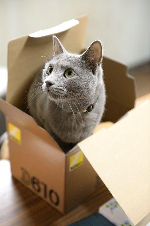 灰色のダンボール猫