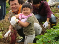 お父さん広場芋掘り (10)