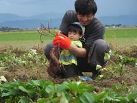 お父さん広場芋掘り (12)