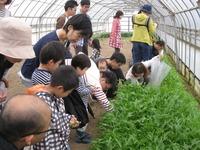 16畑の野菜を取りに行こう 017