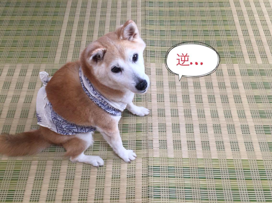 NPO法人 福井犬・猫を救う会:『花火や雷の音に怯える、犬を守る方法』愛犬に試してみました! - livedoor ...