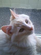 美猫 金ちゃん 2