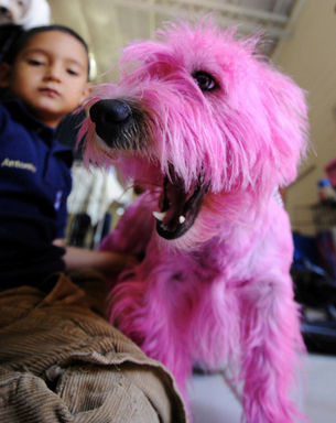 画ピンクの犬