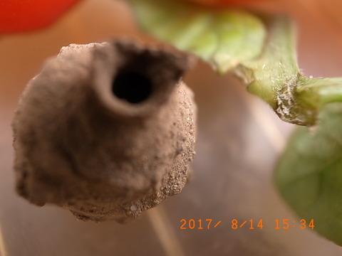 2017-8-15 009