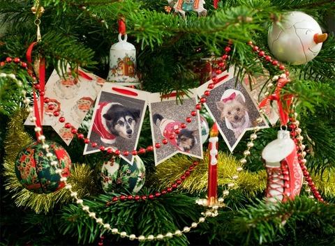 PhotoFunia-クリスマス2