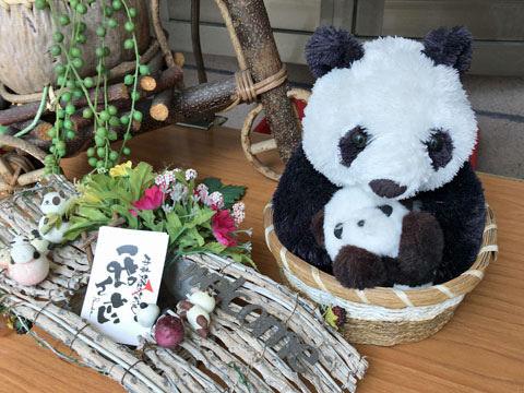 panda19