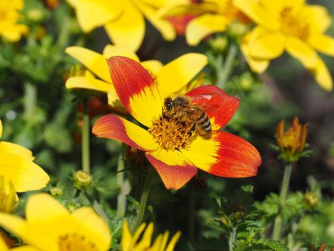 yellowflower3