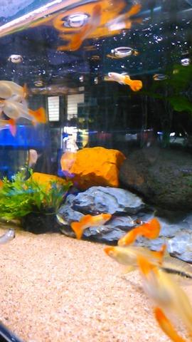 熱帯魚店5