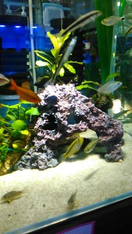 熱帯魚店2