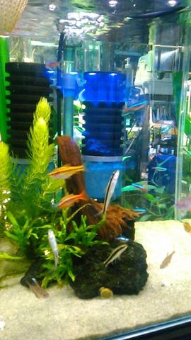熱帯魚店1