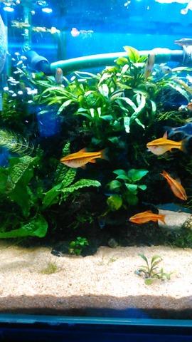 熱帯魚店3