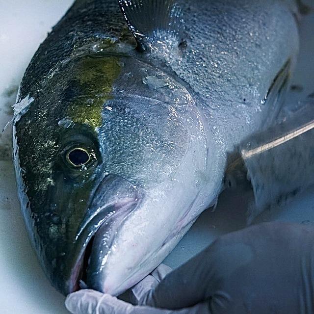 Fishlle!フィシュル