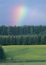 綺麗な虹200 ネクタイの結び方 ファッション 締め方 巻き方