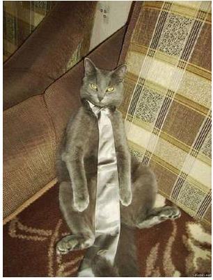 猫のネクタイの巻き方 ネコのネクタイの締め方