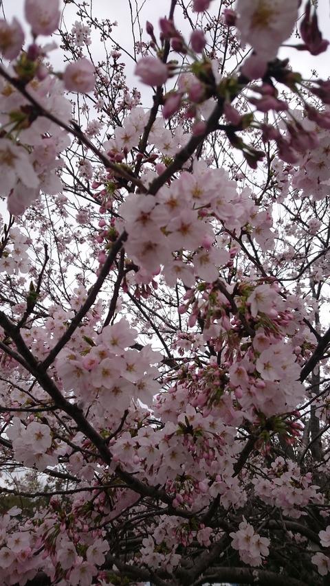 16-04-03-16-36-55-228_photo