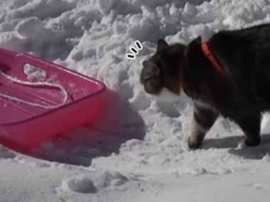 ネコが積もった雪の上を歩いていた。前方には「ソリ」がある → すると…
