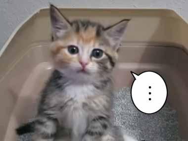 子ネコがちょこんと座って「トイレ」をしていた。もう1度する → こんなポーズになりました…
