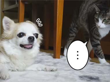 ネコは犬と「お近づきになりたい」ようだ。気になってそばを「うろうろ」する → すると…